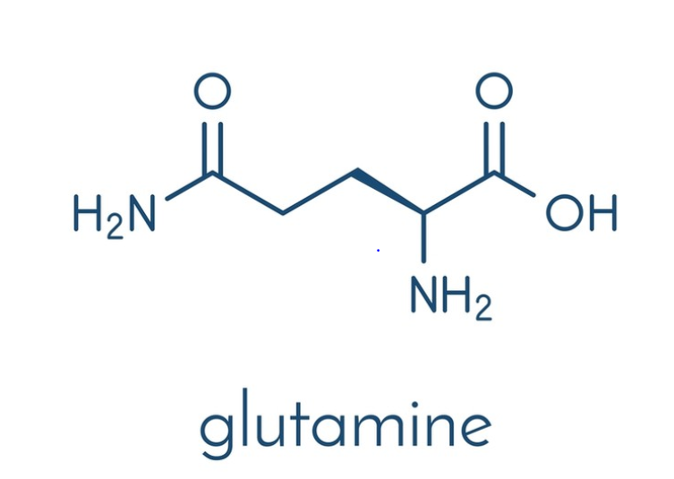 <b>Glutamine</b>— Essential to Your Recovery