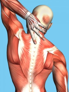 <b>Muscle Science:</b> How to Work with Your Body to Repair Muscles